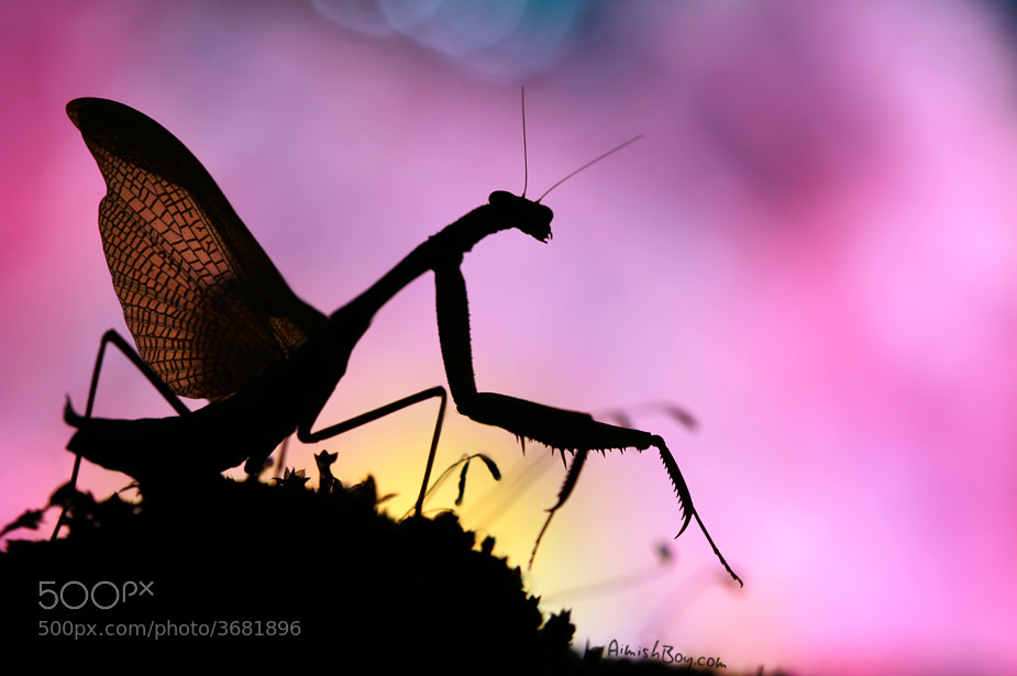 Photograph Winged Shadows by AimishBoy (Nadav Bagim) on 500px