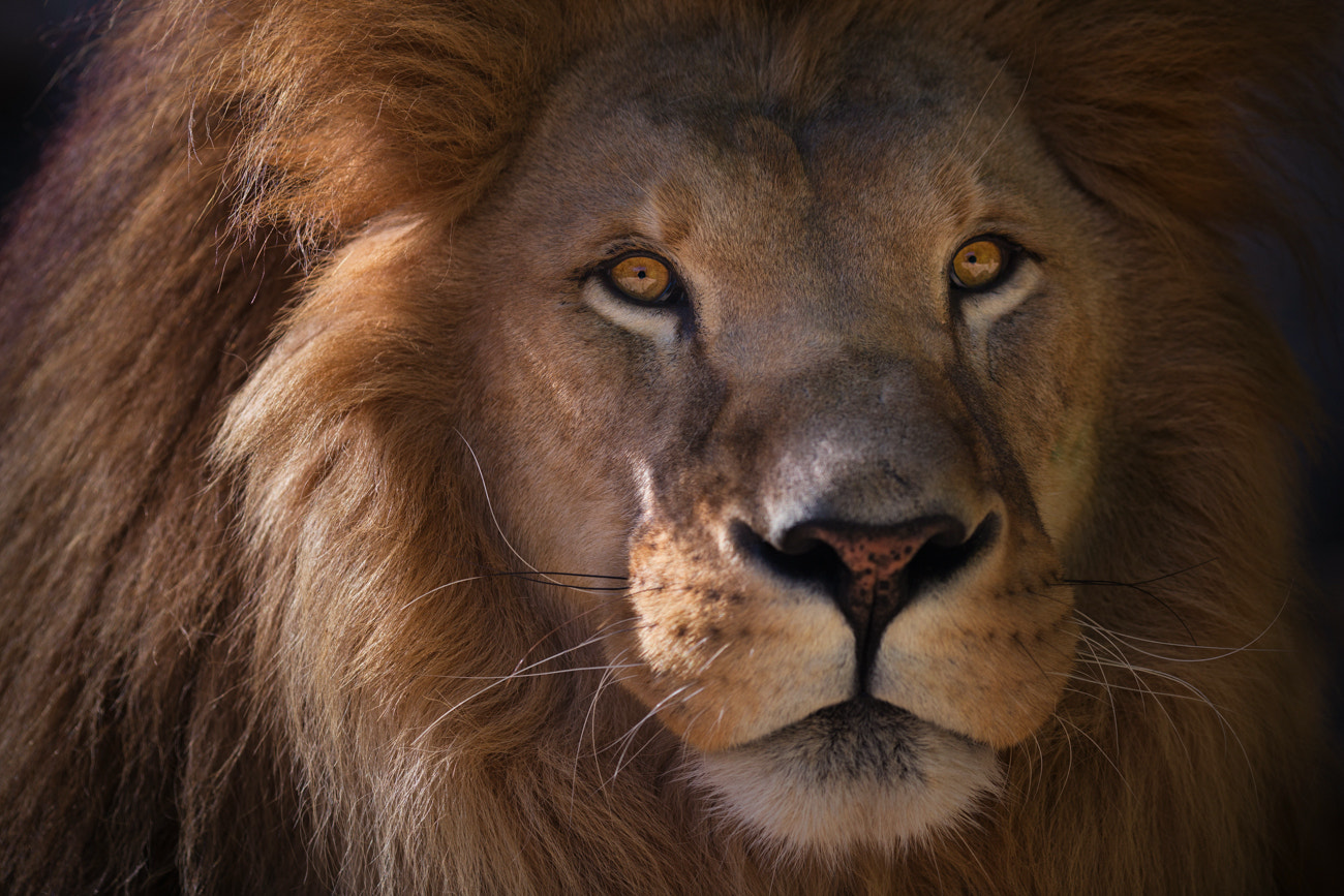 Photograph King of the Jungle by Billy Currie on 500px