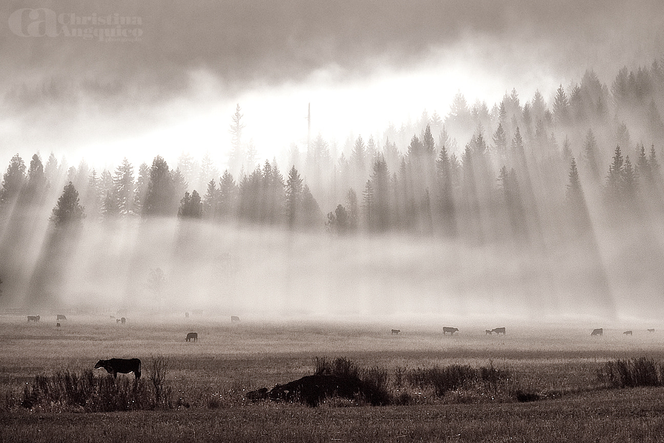 Photograph Cow Pie by Christina Angquico on 500px
