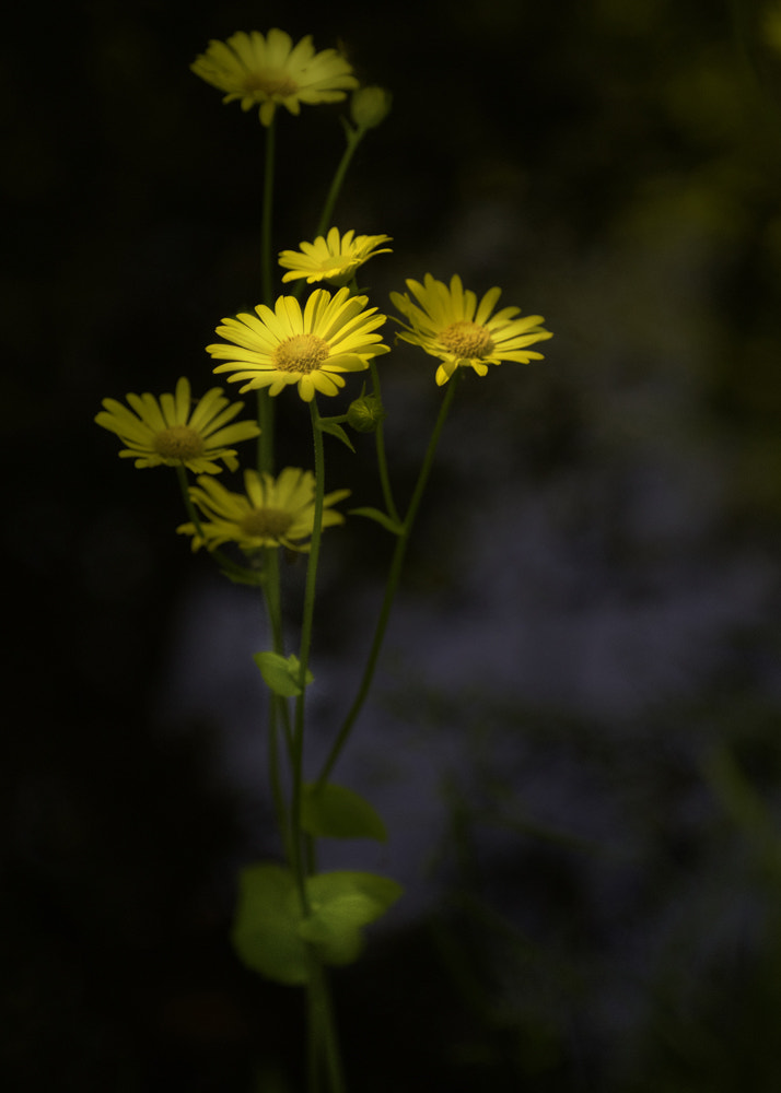 Photograph gold in the dark by Keith Britton on 500px