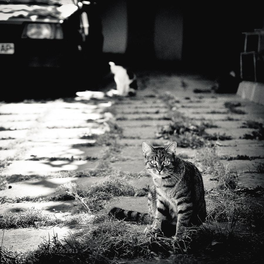 Street Smart by Vitaliy Galak