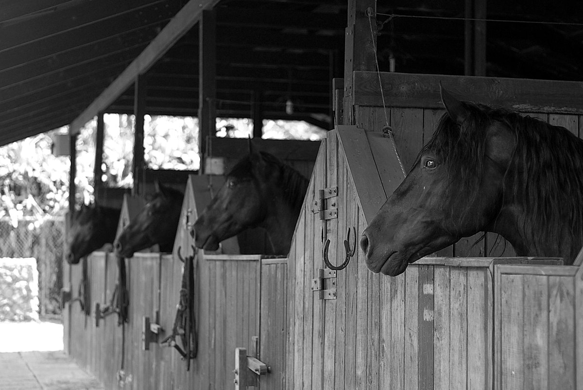 Photograph horses in his stable by Anthony Zuñiga on 500px