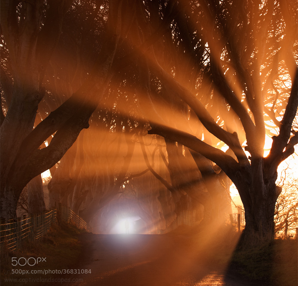 Photograph The lightning Tree by Stephen Emerson on 500px