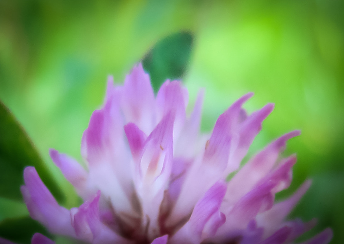 Photograph Clover by Pat Teglia on 500px