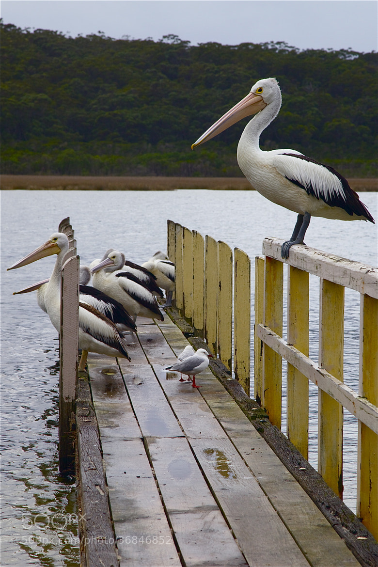 Photograph Waiting for fish by john spies on 500px