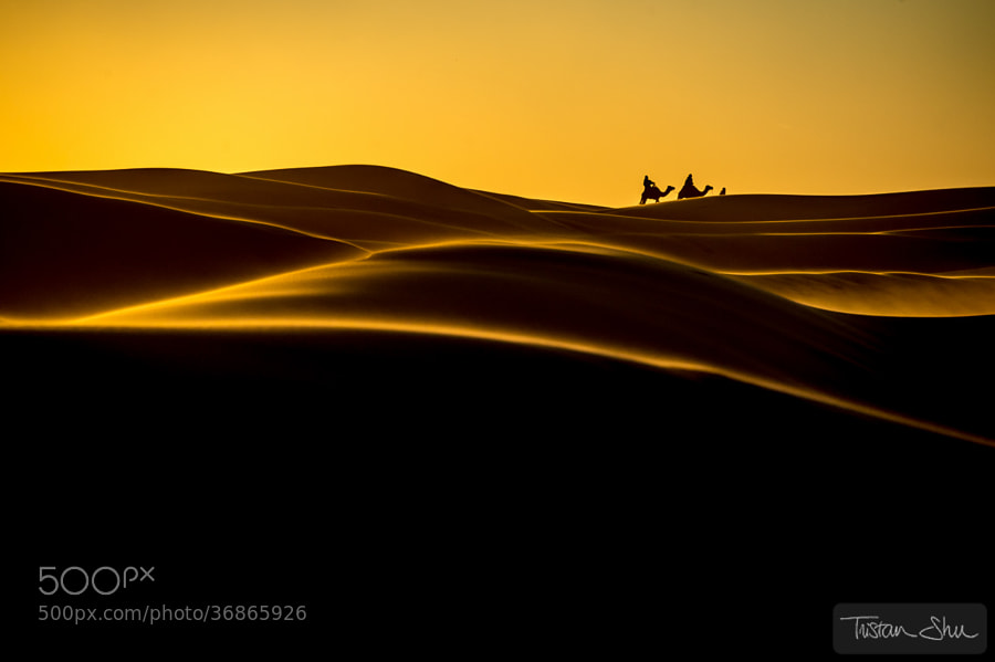 Photograph The Desert Life by Tristan Shu on 500px