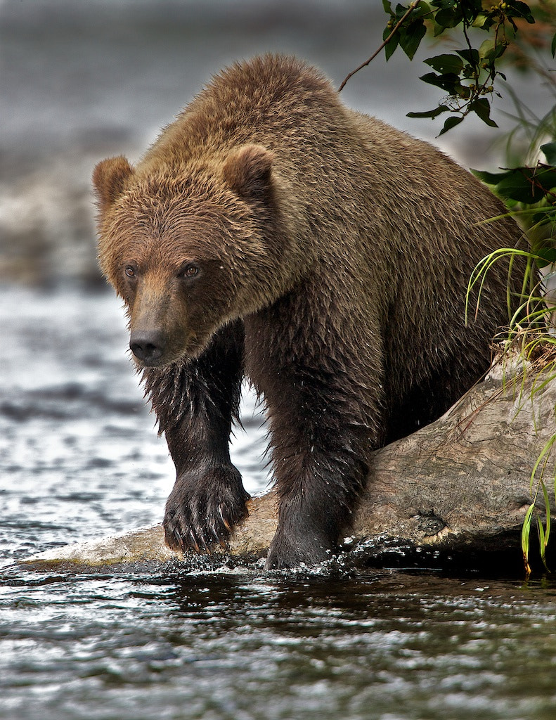 Photograph The Challenge by Buck Shreck on 500px