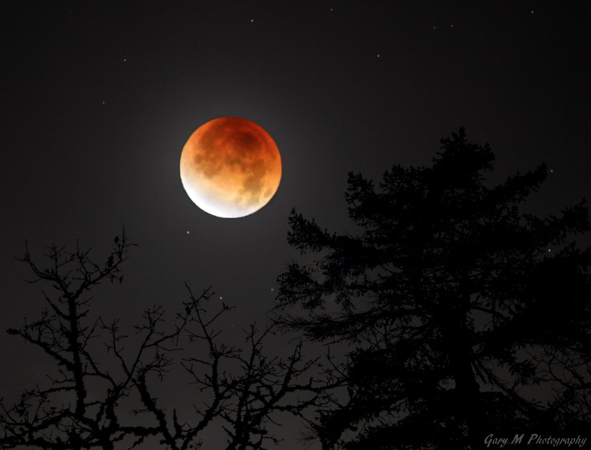 Photograph Lunar Eclipse 2011 by Gary Meyers on 500px