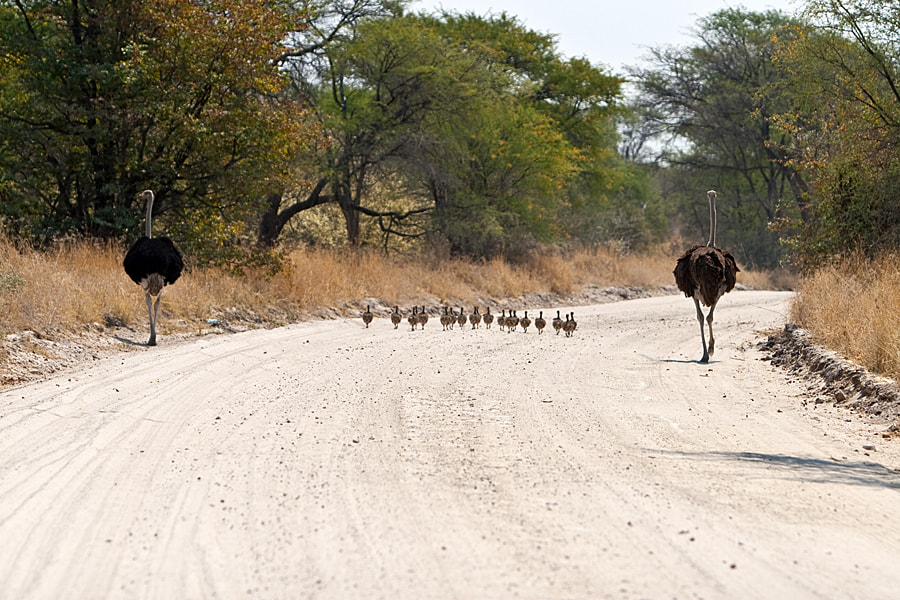 Photograph Family on the road by Jochen Van de Perre on 500px