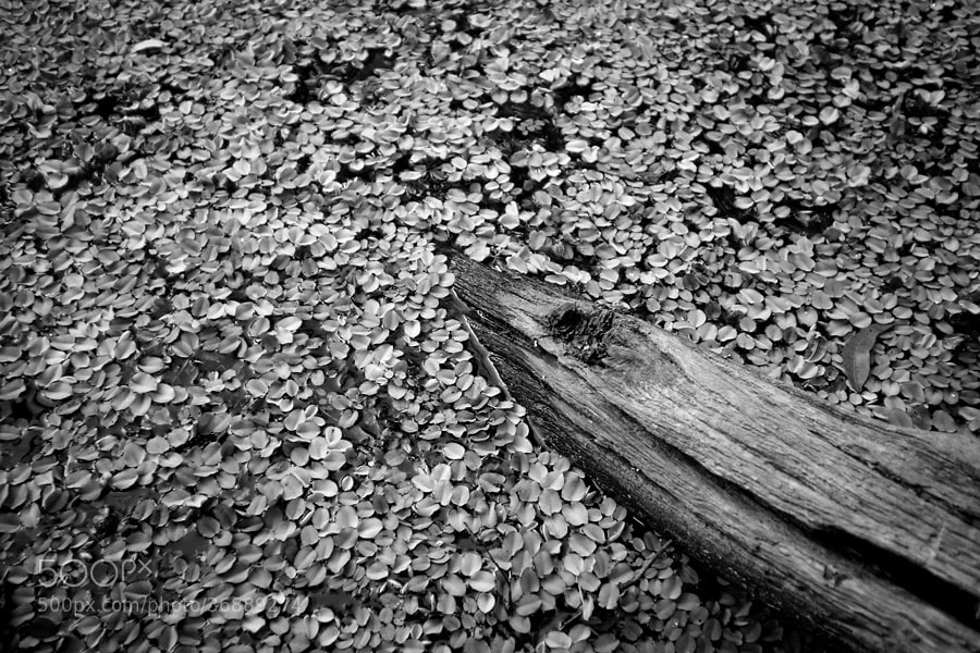 Photograph Pond by Bernard West on 500px