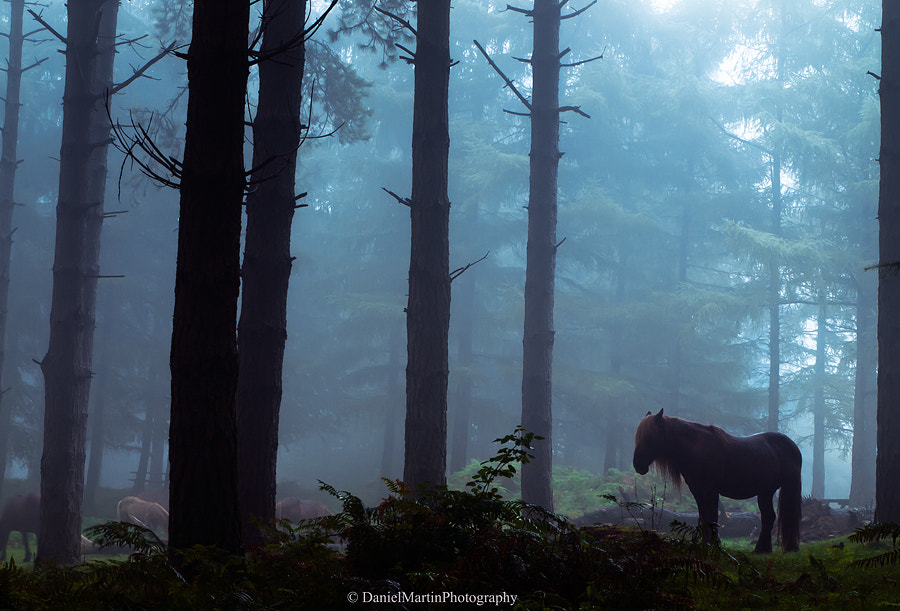 Photograph Horse in the dark forest by Daniel Martin. on 500px