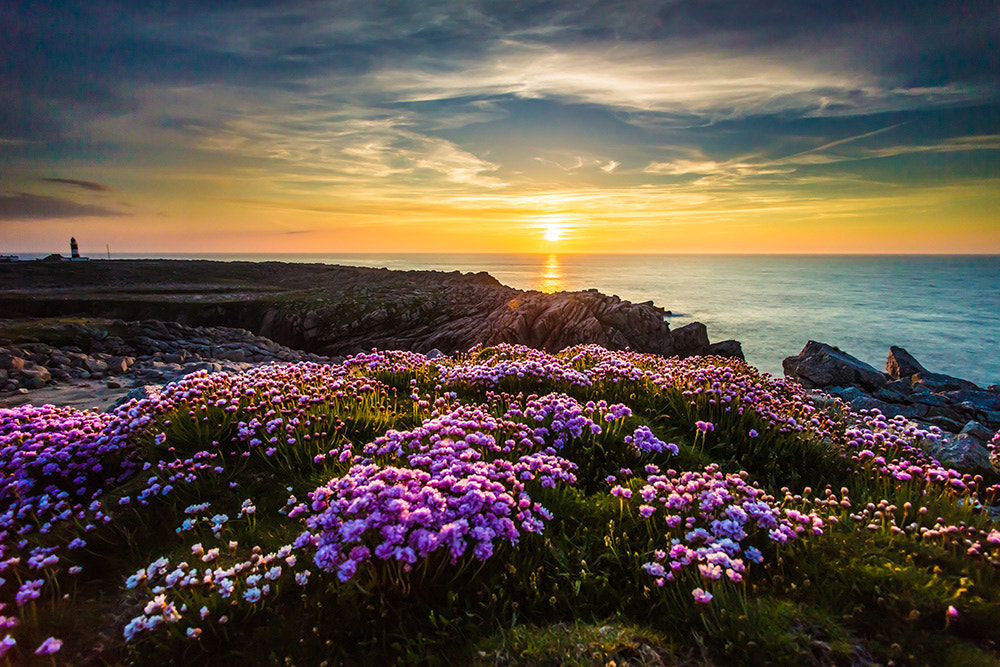 Photograph blooming sunset  by Owen Clarke on 500px