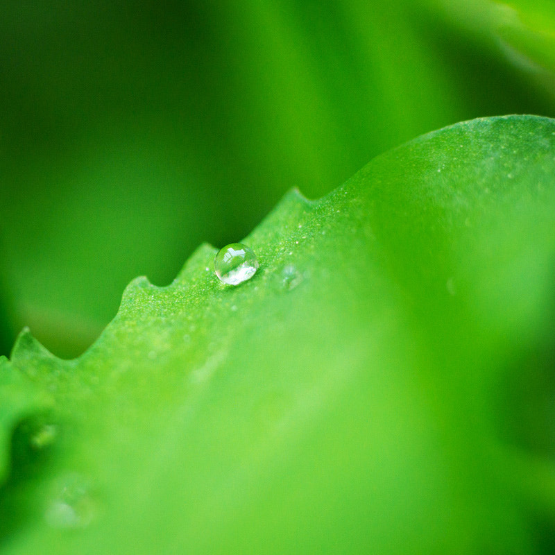 Photograph After the rain by Bbbean on 500px