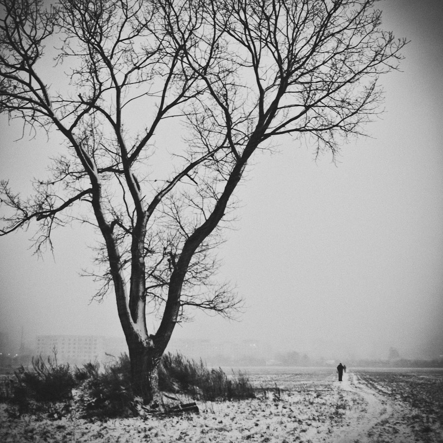 Photograph the old man and the tree by Marcin Starosta on 500px