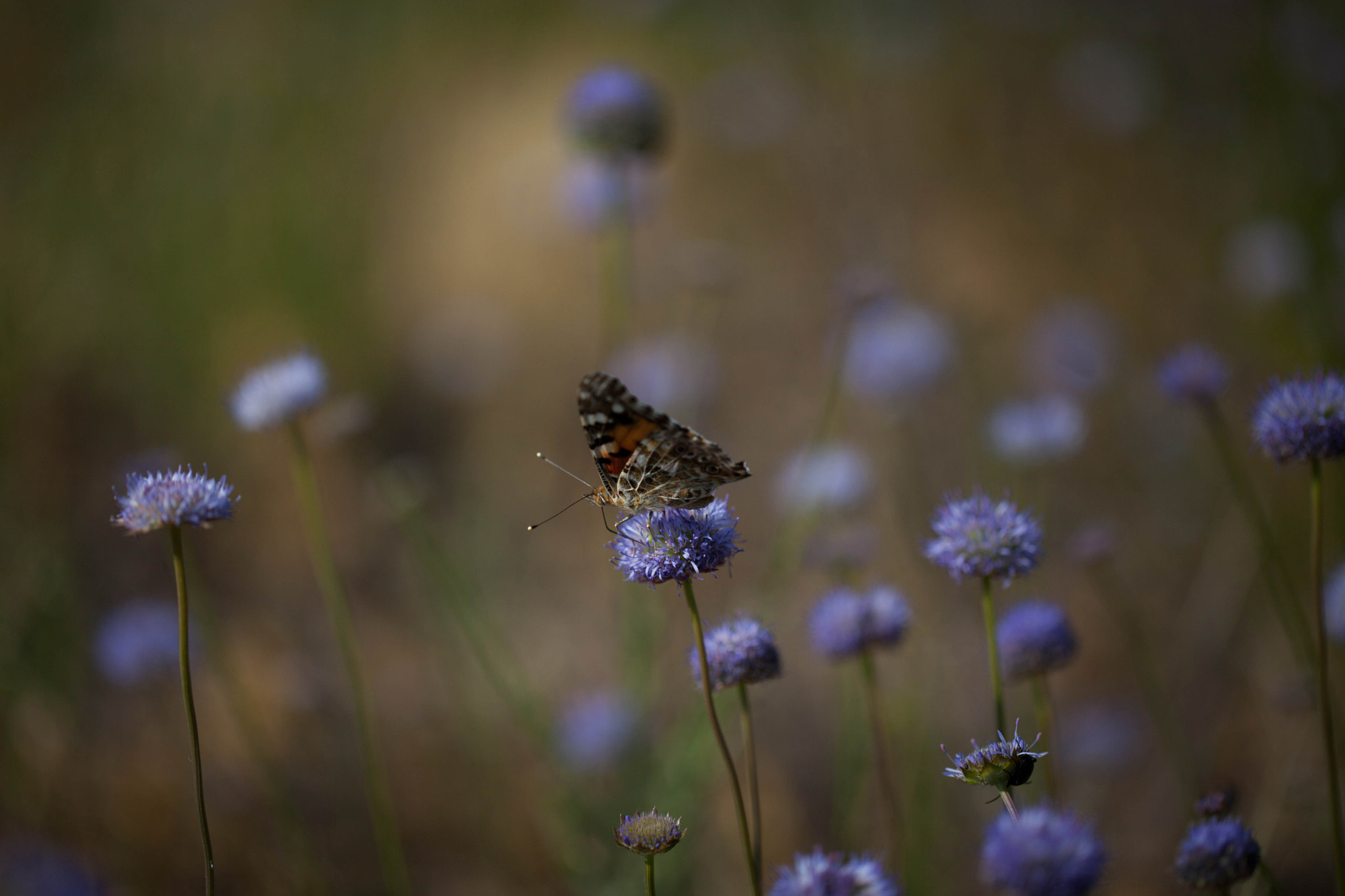 Photograph A butterfly in Valle Del Jerte, Spain by Naomi Turner on 500px