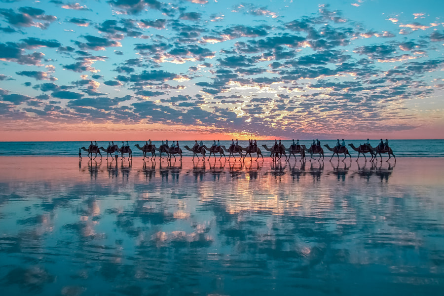 Camels in Broome, Australia by Shahar Keren on 500px.com