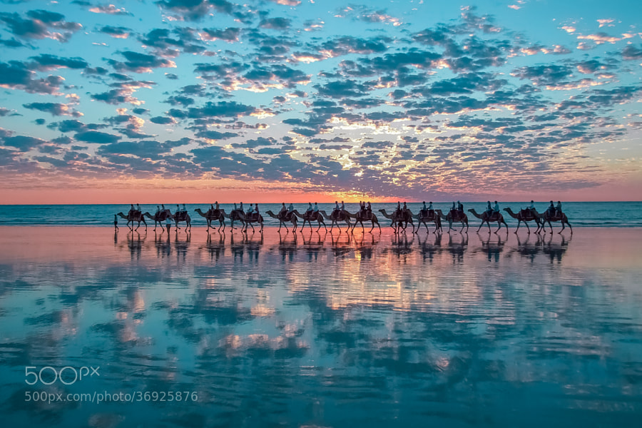 Photograph Camels in Broome, Australia by Shahar Keren on 500px