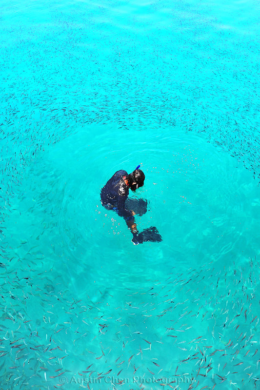Photograph 34/365 Free Diver by AustinChenPhotography on 500px