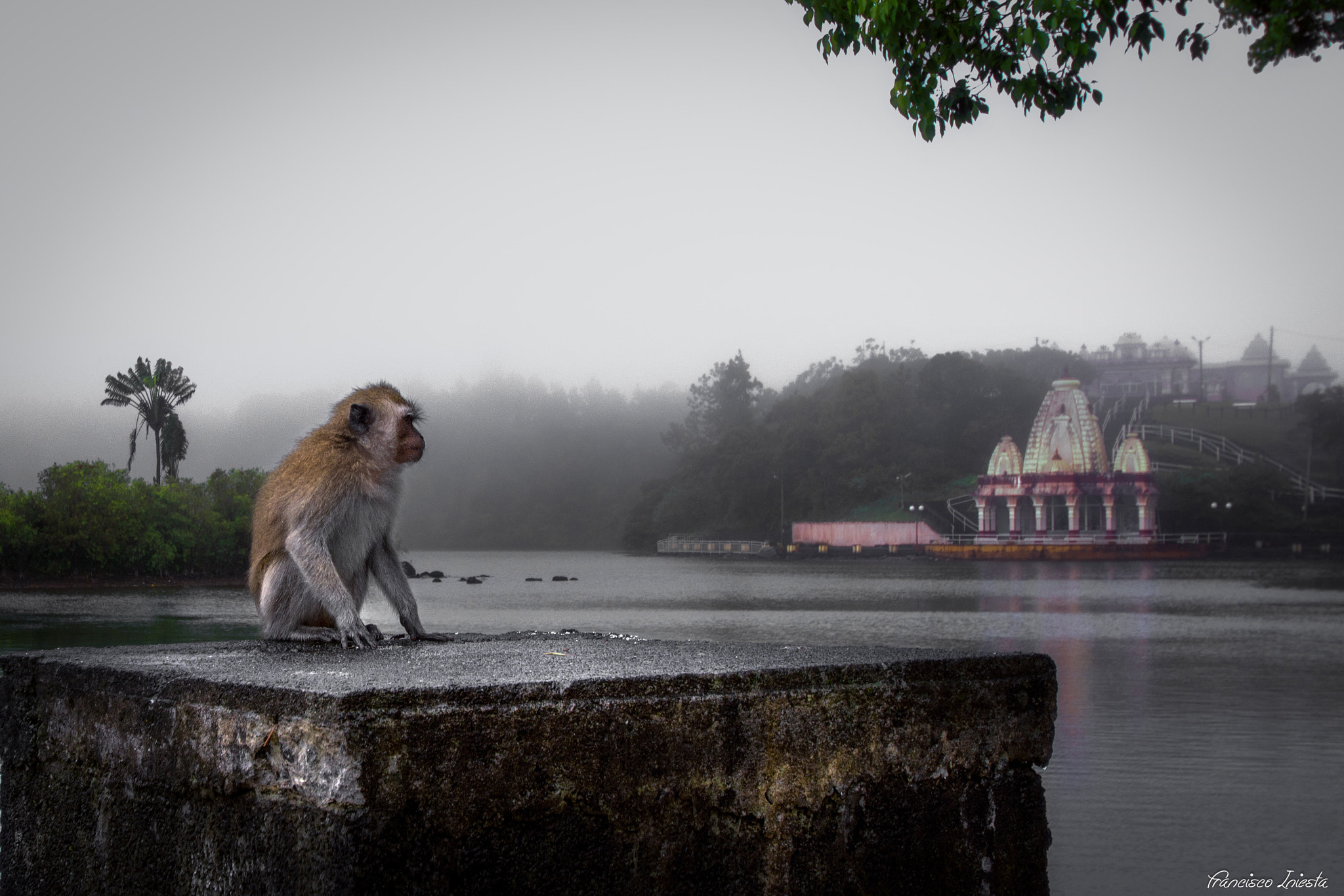 Photograph Monkey by Francisco Iniesta on 500px