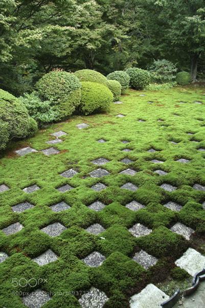 Photograph Tofukuji Garden, Kyoto by John Lander on 500px