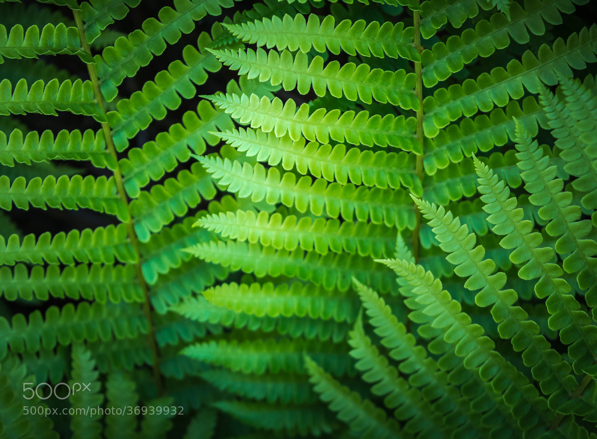 Photograph Fern by Stevan Tontich on 500px