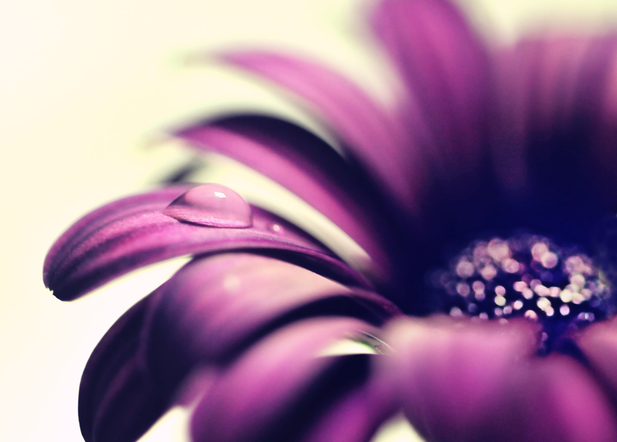 Photograph On the purple stage by y2- hiro on 500px