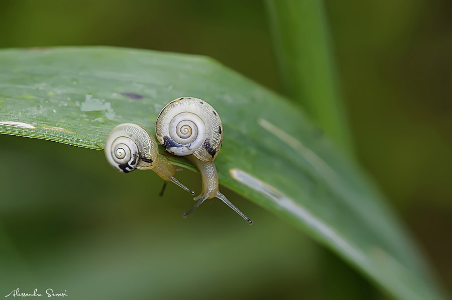 Photograph SNAILS by Alessandro Serresi on 500px