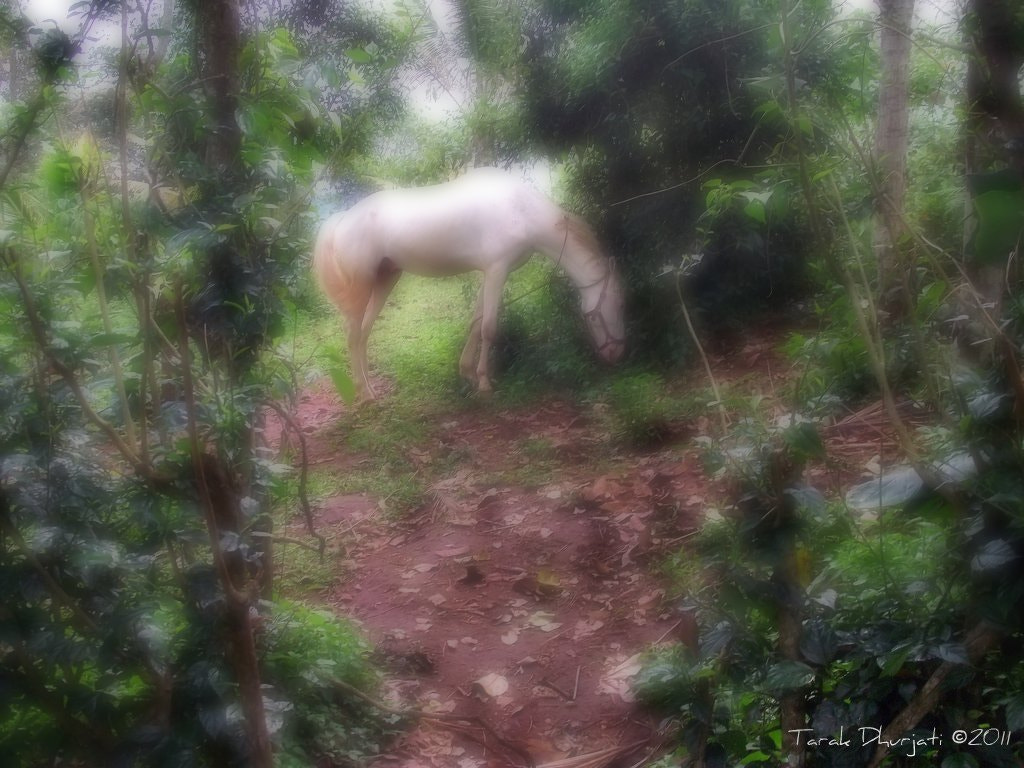 Photograph Horse in the Spice garden by SparklingSpinStress Photography on 500px