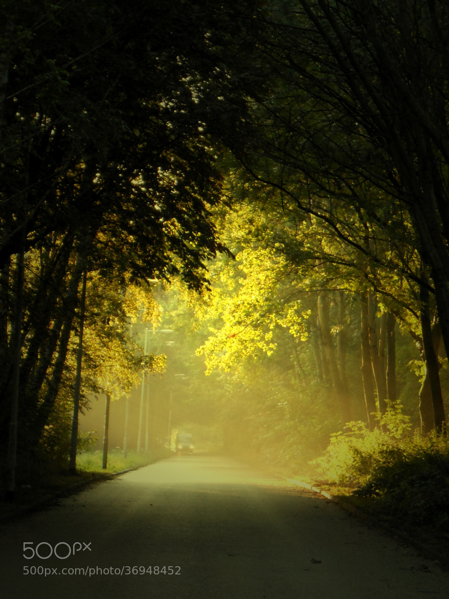 Photograph Road in a dutch forest by Stehouwer and Recio on 500px
