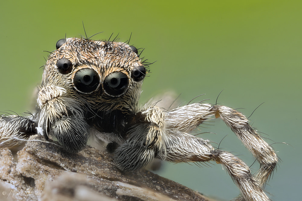 Photograph Jumper by Markus Reugels on 500px
