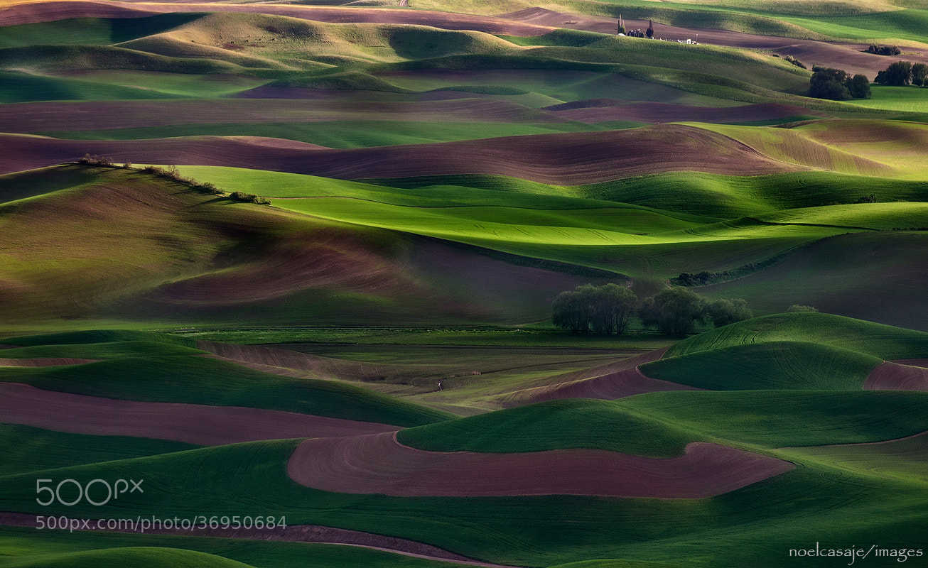 "Photograph "" THE MASTER'S TOUCH"" Steptoe Butte, Palouse- Washington by noel casaje on 500px"