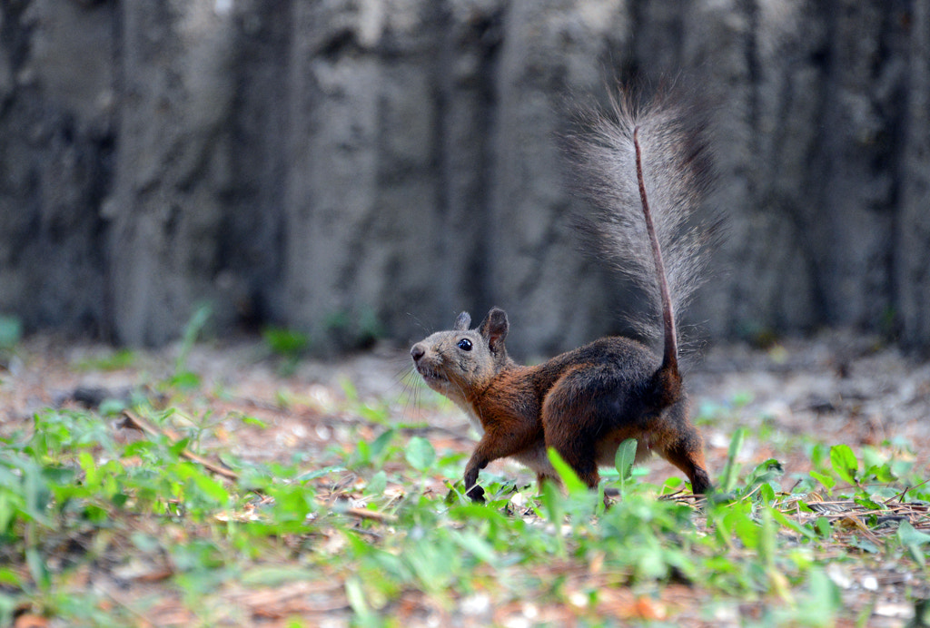 Photograph a squirrel by sunyi2001 on 500px