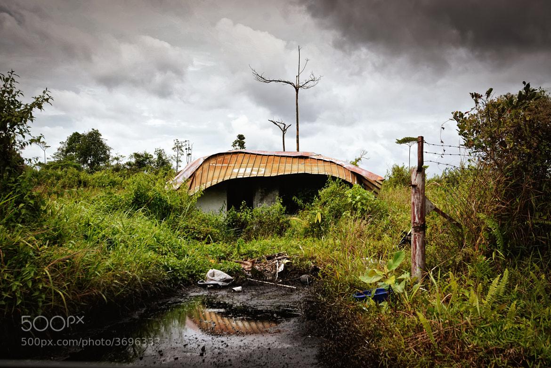 Photograph Jungle Abandon by Dean Mullin on 500px