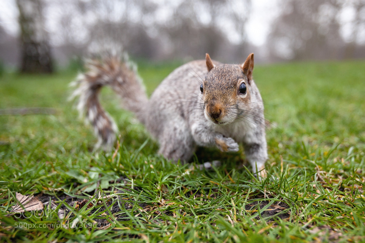 Photograph Squirrel by Emelianenko Dmitrii on 500px
