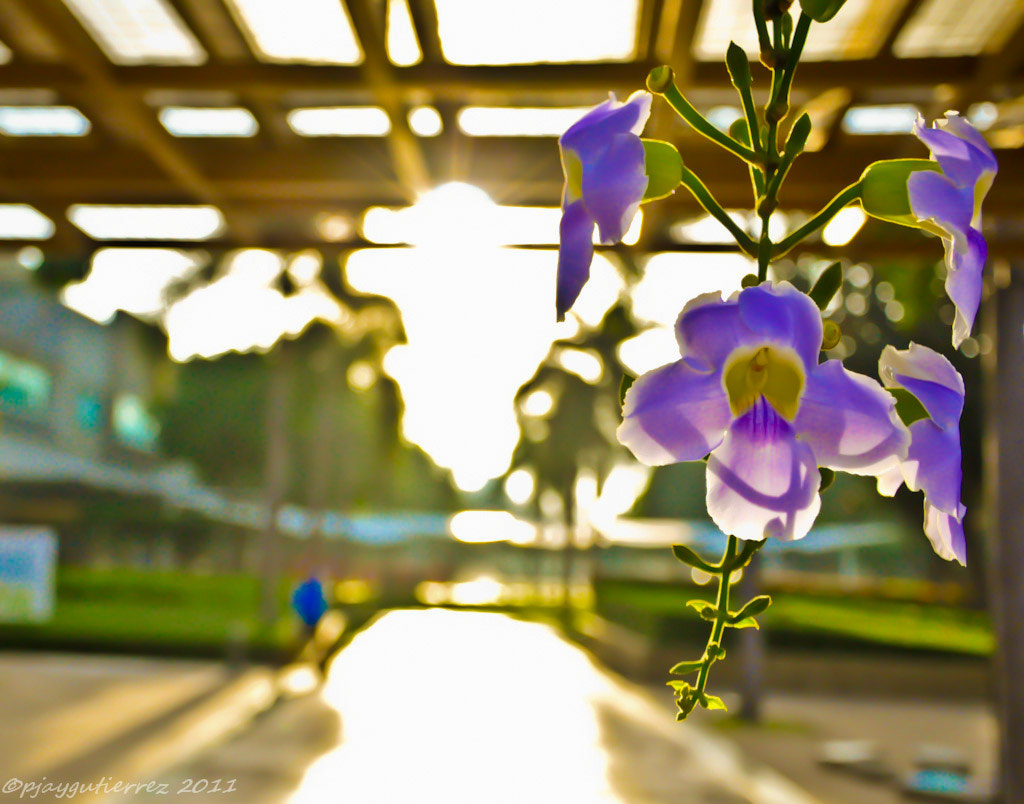 Photograph Morning Flower  by Andres Peter June  Gutierrez on 500px
