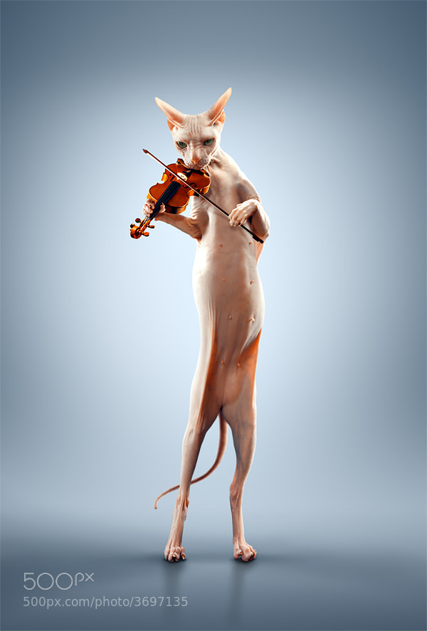 Photograph Just a cat playing the violin. by Alexei Sovertkov on 500px