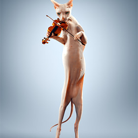 Just a cat playing the violin. by Alexei Sovertkov (sovertkov)) on 500px.com