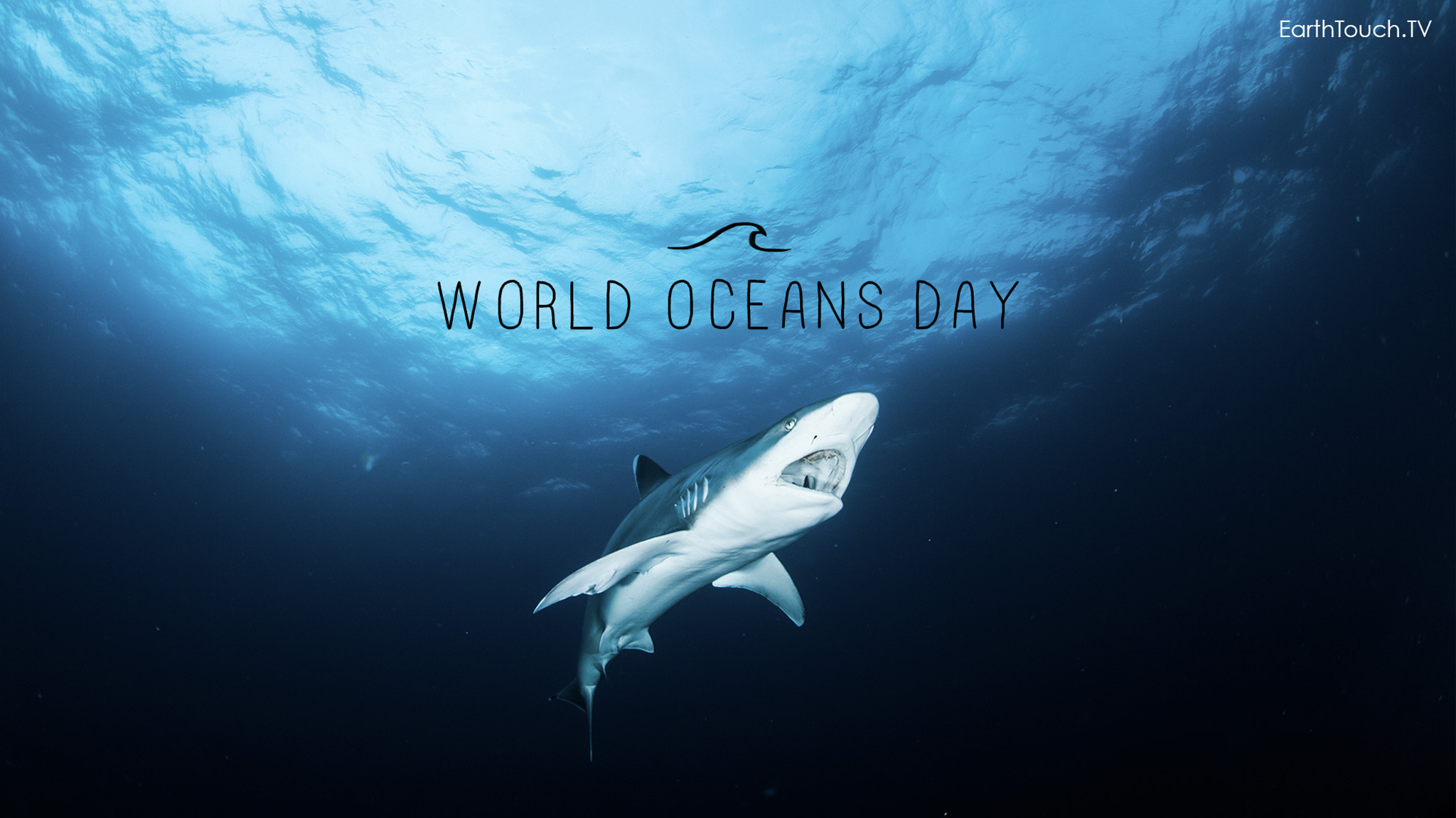 Photograph In Celebration Of World Oceans Day by Earth Touch on 500px