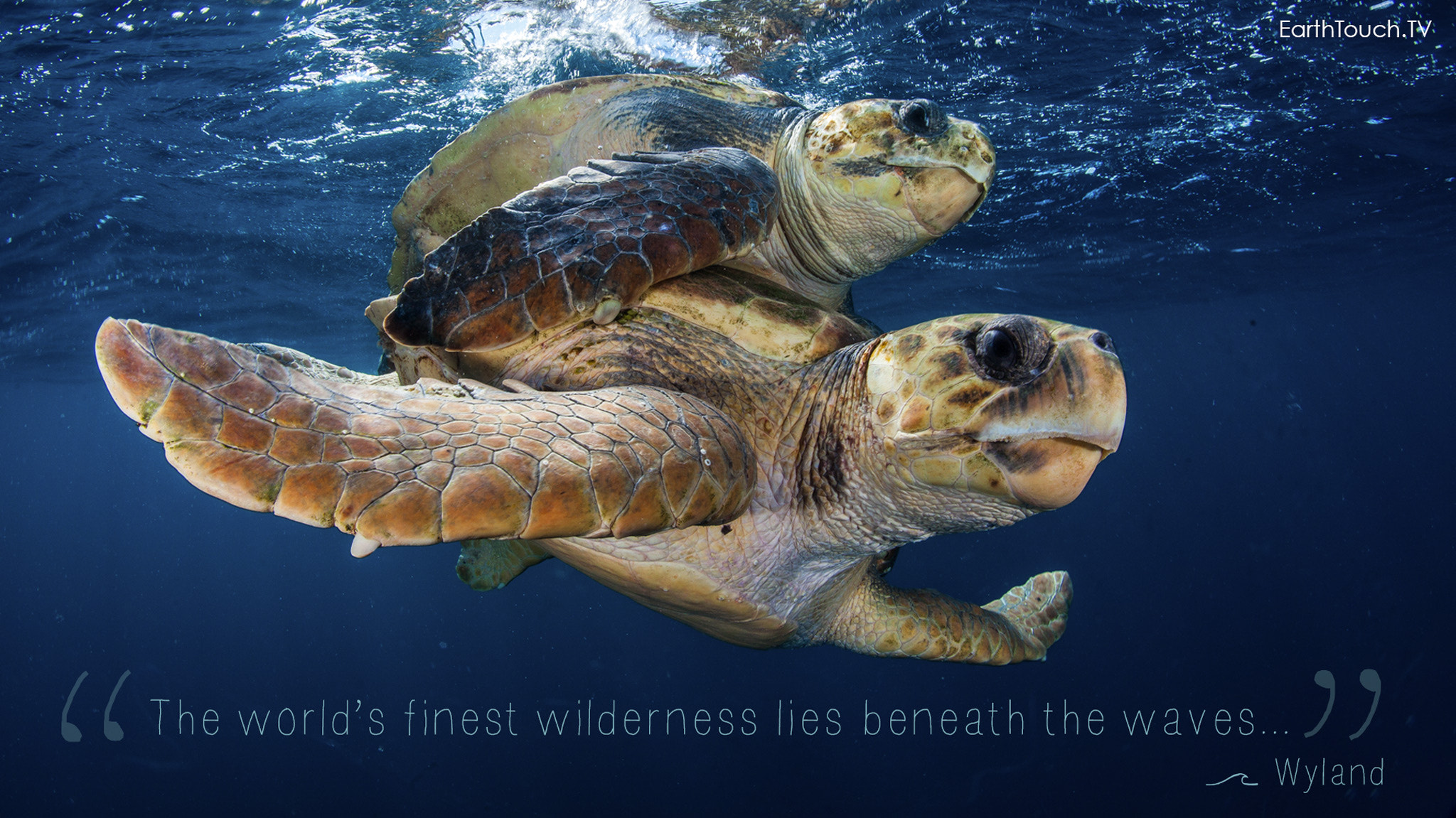 Photograph World Oceans Day   Turtles by Earth Touch on 500px