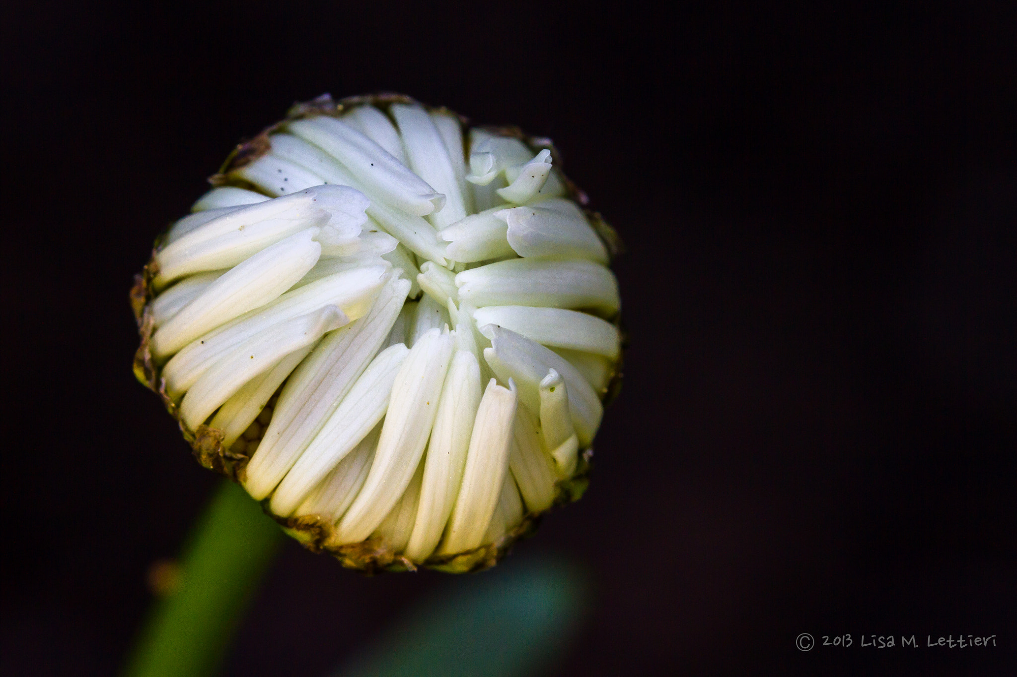 Photograph New by Lisa Lettieri on 500px