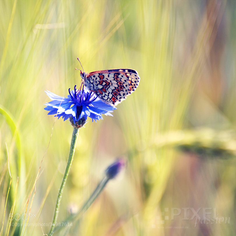 Photograph summer light by Pixel Passion on 500px