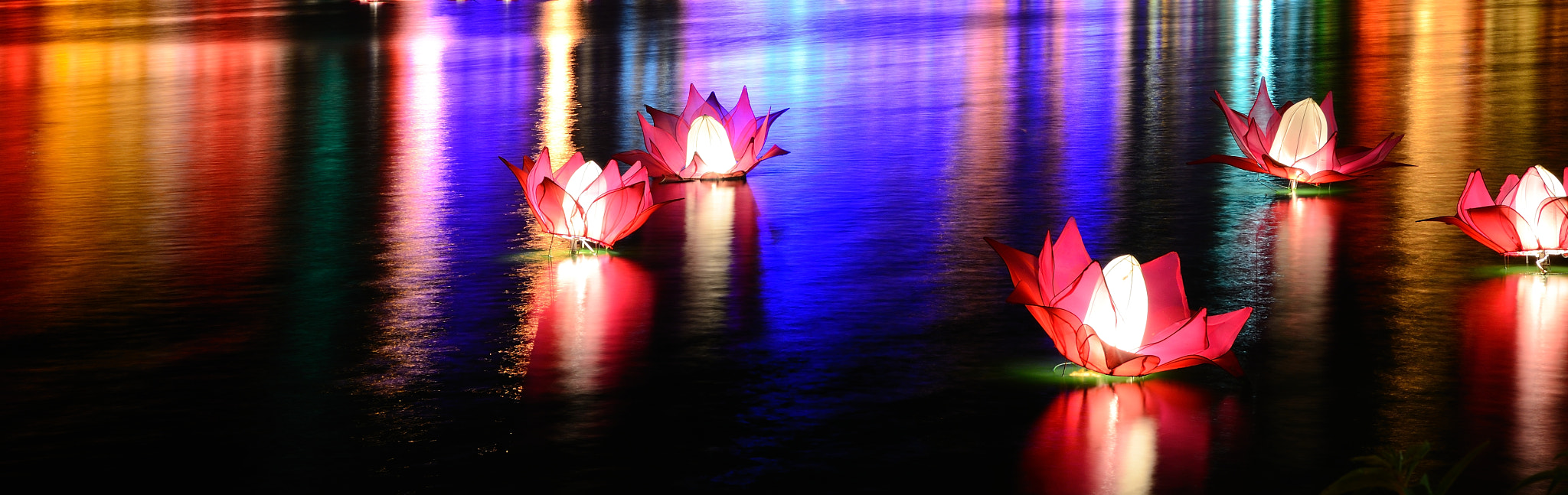 Photograph Lotus.. by Vihanga Dayananda on 500px