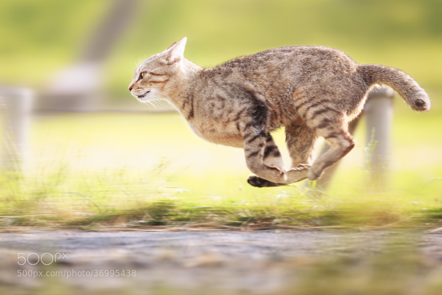 Photograph Bullet Cat by Seiji Mamiya on 500px
