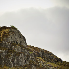 A lone tree in Glencoe