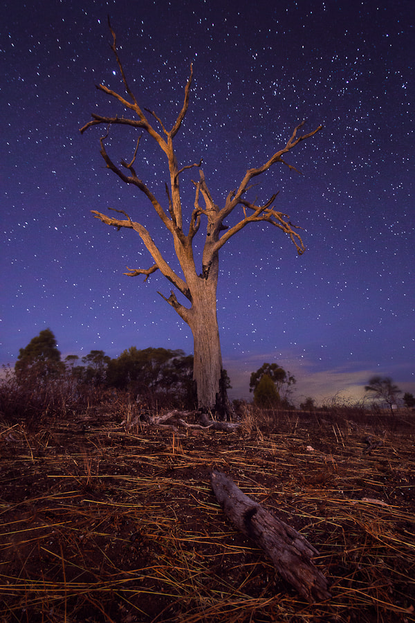 Photograph Alone in the Dark by Tabitha  Ruot on 500px