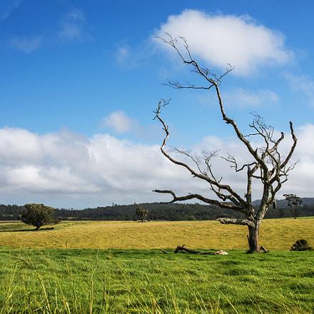 Evelyn, Queensland.