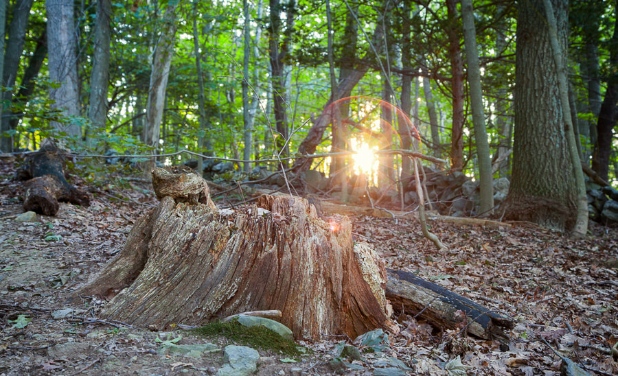 Photograph Tree Stump on Indian Hill, West Newbury, Massachusetts by Stanton Champion on 500px