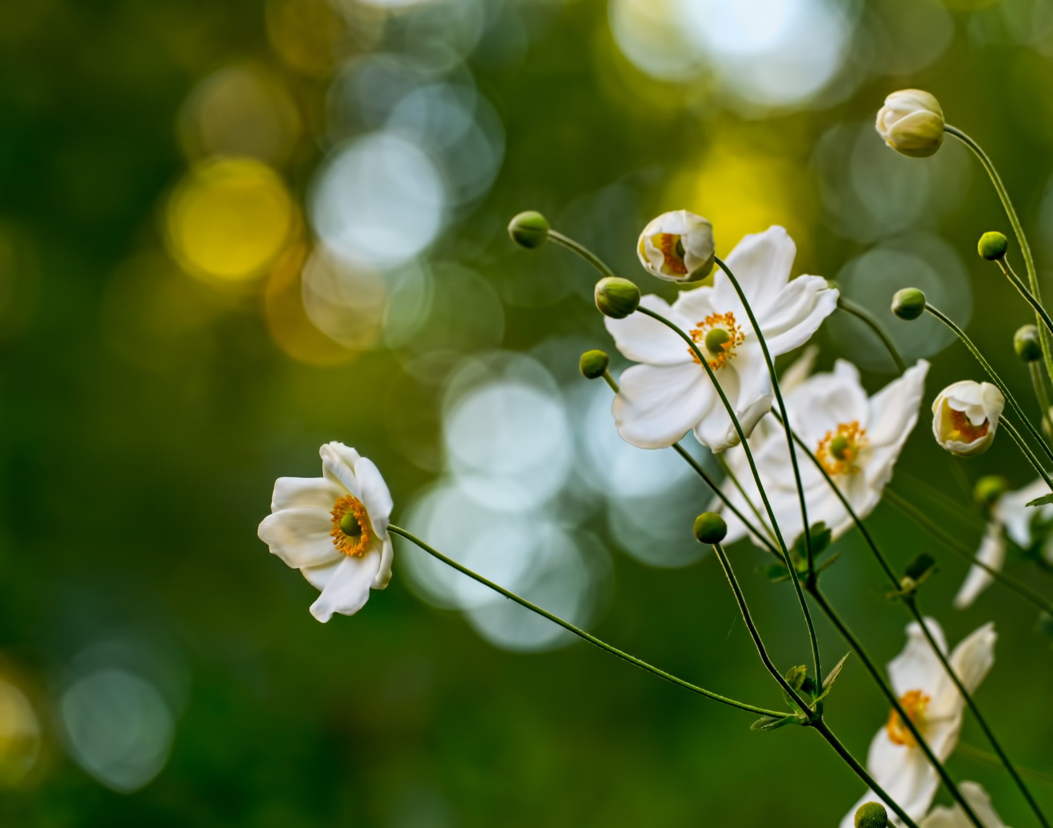 Photograph White Beauties by Bipphy Kath on 500px