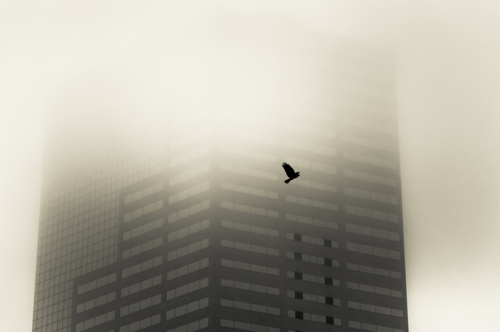 Photograph Raven on the Fog by Orlin Bertsch on 500px