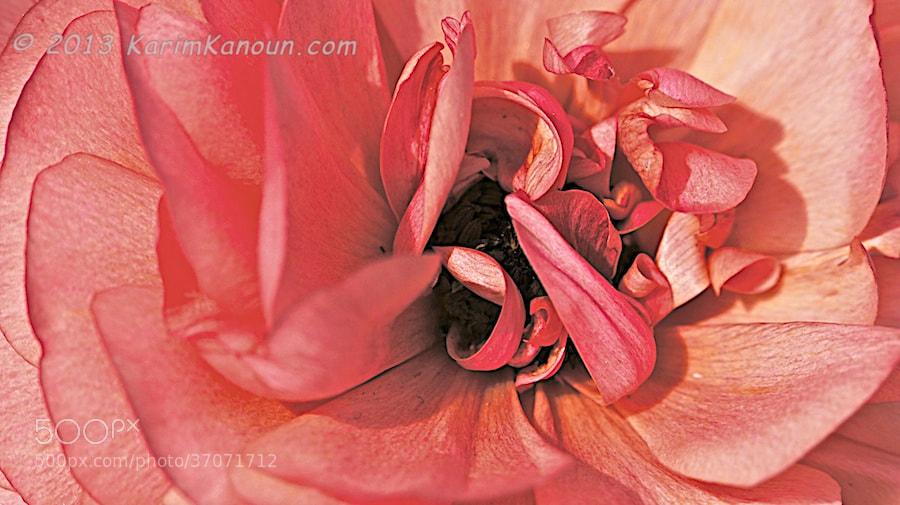 Photograph Pink flower close up by Karim Kanoun on 500px